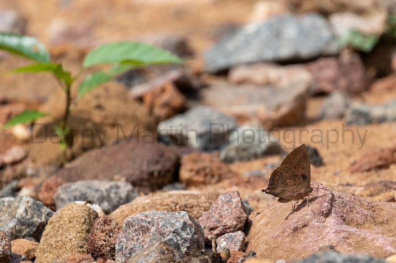 Purple Leaf Blue<br /> Telangana, India
