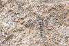 Granite Ghost<br /> Telangana, India