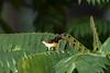 Purple-rumped Sunbird<br /> Kerala, India