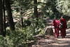 Tibetan Buddhist monks hiking through the woods.