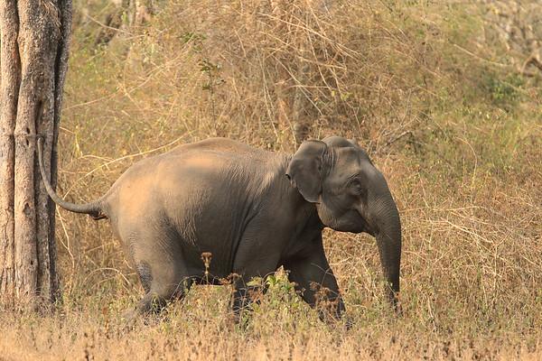 India - Kabini Safari 1502