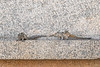 Indian (Three-striped) Palm Squirrels on ancient temple ruins<br /> Karnataka, India