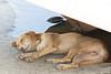 Dog<br /> Karnataka, India