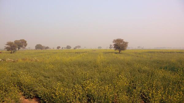 India - Rajasthan - Bharatpur