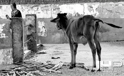 """""""True Love Part I"""", Rishikesh, Uttaranchal, Indial, 2007 Print IND373-296"""