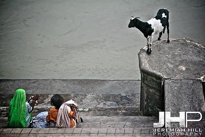 """Of Laundry And Goats"", Rishikesh, Uttuaranchal, India, 2007 Print IND3628-090"