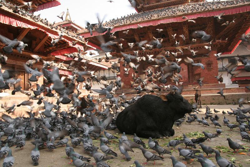 Katmandu, Nepal.