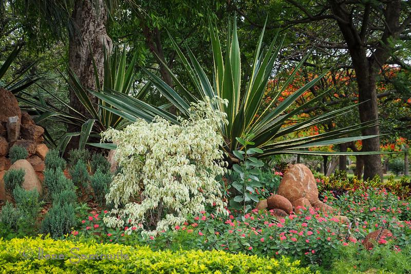 A beautiful garden in Bangalore
