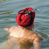 Bathing Amritsar