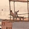 king of Varanasi