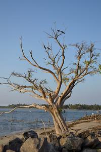 Kochi, India 2011