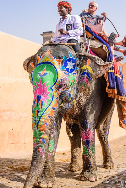 Elephant Ride to Amber Fort and Palace