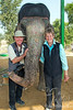 Judy & Alan cuddling with an elephant ~ ELEfantastic, Jaipur, India