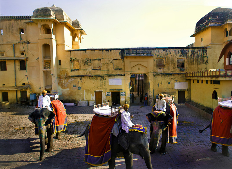 Elephants, Amber Fort, Jaipur, India