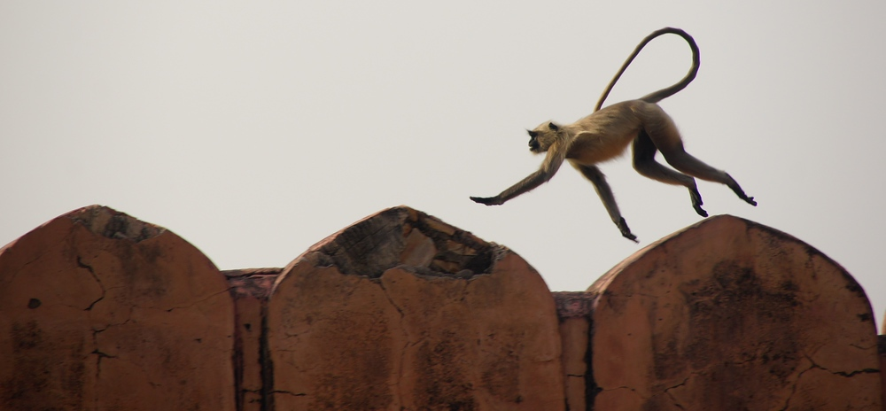 A monkey leaps along the outside of this fort wall. I was sure glad I brought my telephoto lens along with me.