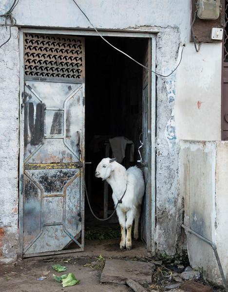 Door goat