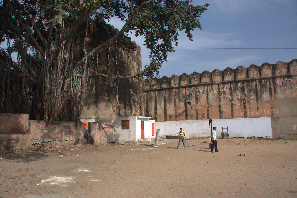 Cricket, by the Pink City wall.