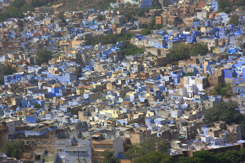 Characteristic Blue painted Jodhpur houses from the view of the Fort.