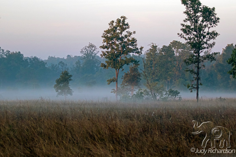 Misty Morning at Kanha National Park, India