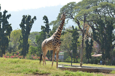 Mysore Zoo or Shri Chamarajendra Zoological Gardens is one of the oldest zoo in India