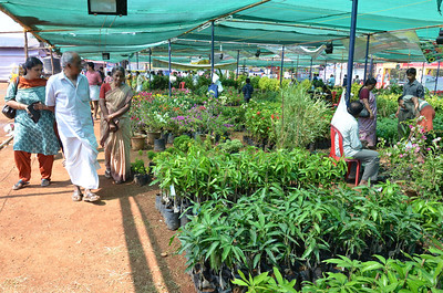 Lions Flower Show 2011, Cannanore, Kerala