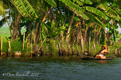 Backwaters of Alleppe, Kerala, India