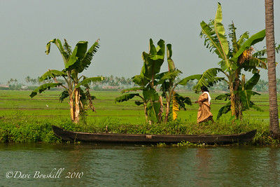 Canoes on the banks of the Alleppey backwaters in Kerala, India