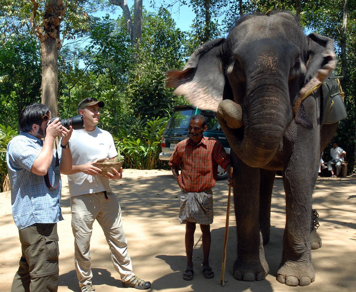 Documenting the elephant