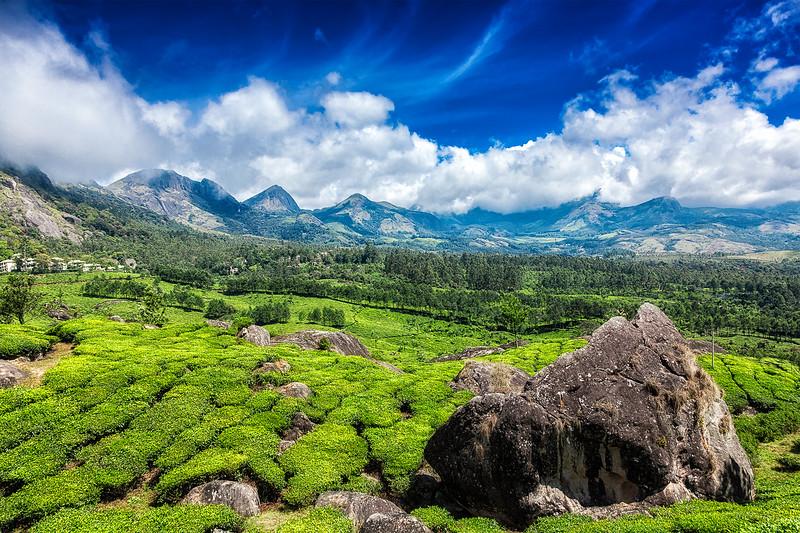 Tea plantations. Munnar, Kerala