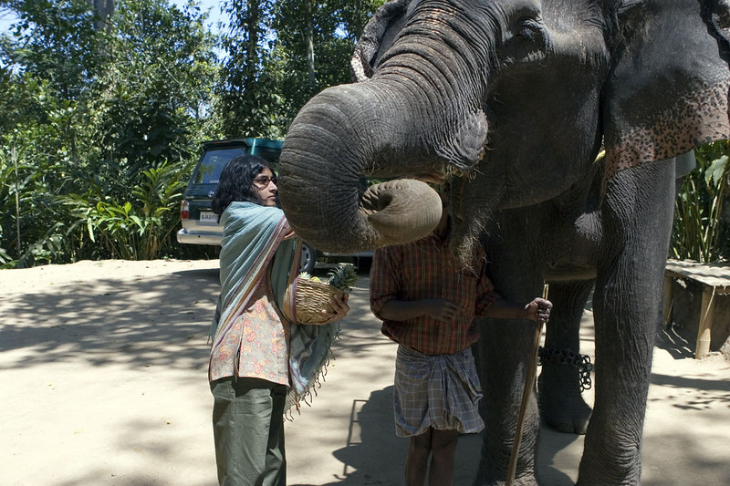Mrs H giving the elephant a treat