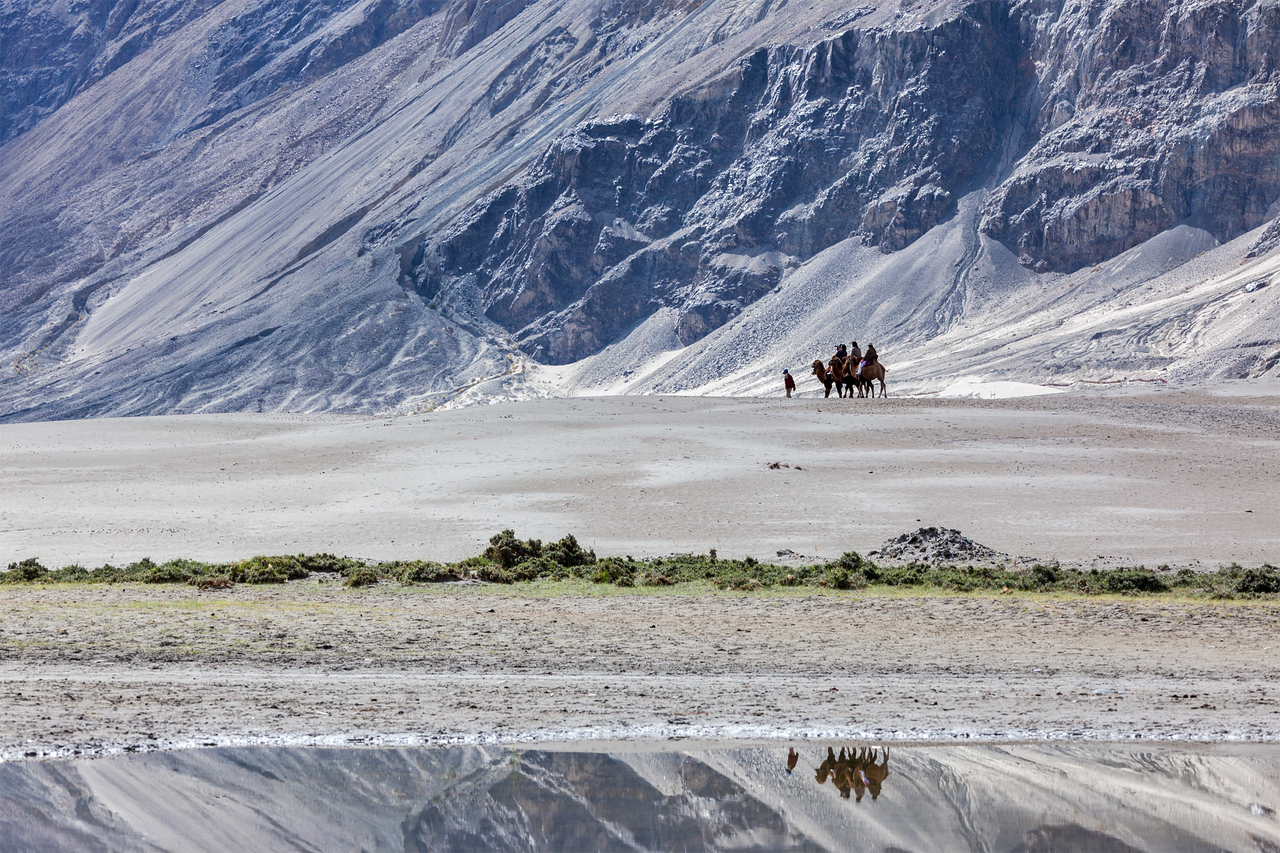 Tourists riding camels in Nubra valley, Ladakh, India