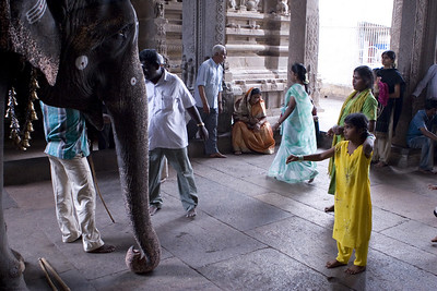 Devotees give a small offering like a coin or some food. The elephant blesses them after handing the offering over to the mahout (elephant keeper).