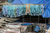 Pastel shirts drying at the Dhobi Ghat, Mumbai, India
