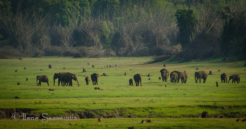 Elephants of Nagerhole