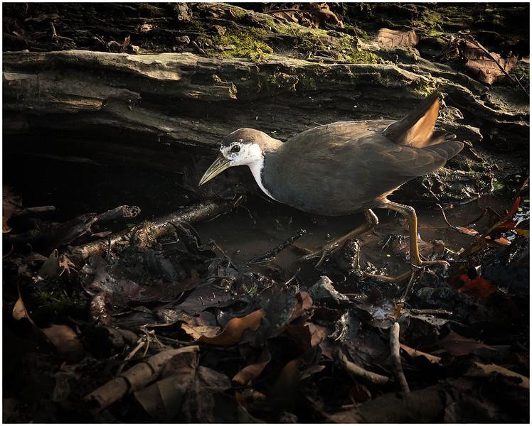 Bird With Really Big Feet