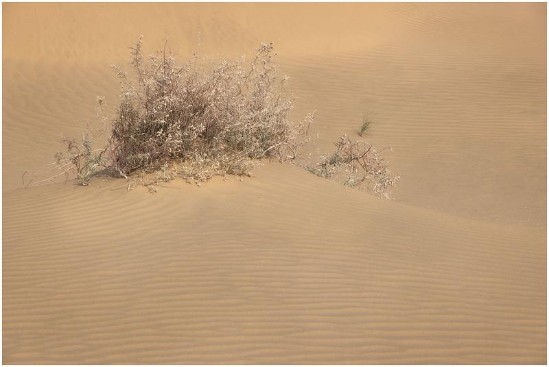 Dry Bush