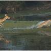 Jumping Deers