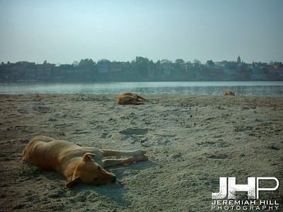 """Where Sleeping Dogs Die"", Varanasi, Uttar Pradesh, India, 2005 Print INDIA8-33V2"