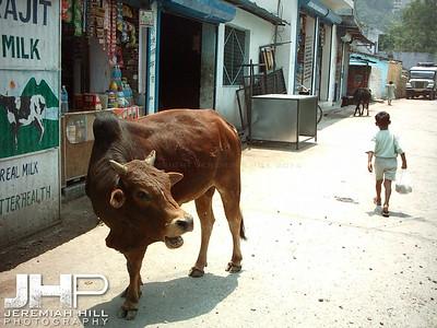 """Showdown In The Street"", Rishikesh, Uttaranchal, India, 2005 Print INDIA11-81"