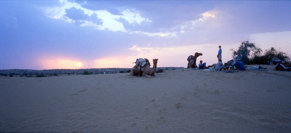 Camels on the Thar desert near Jaisalmer