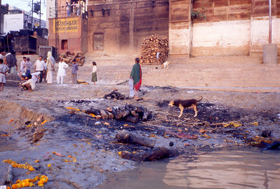 Dog eating leftovers at the burning ghat. I like the Hindu perception. Cremation has released the soul, what's left is simply organic matter being reintegrated into the environment.