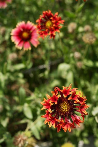 Flowers in the Nek Chand Rock Garden