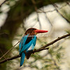 Ranhambore, India