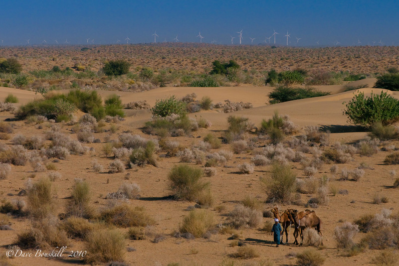 Windmills and Camels dot the landscape of the Thar Desert, India