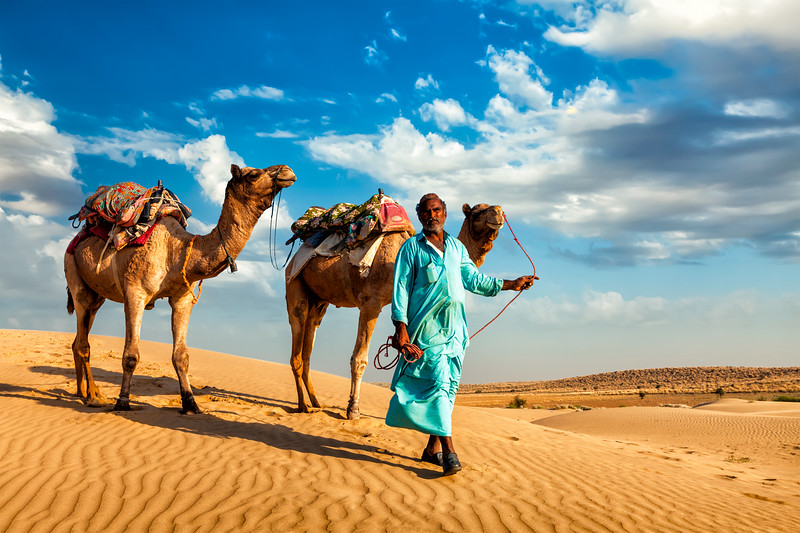 Cameleer (camel driver) with camels in dunes of Thar desert. Rajasthan, India