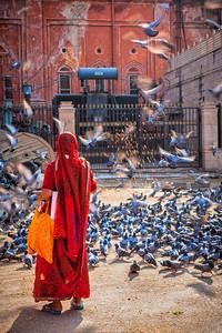 Indian woman in sari feeding pigeons in stree
