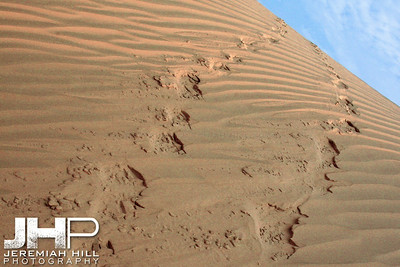 """Into The Sand"", Thar Desert, Rajasthan, India, 2007 Print IND3926-135"