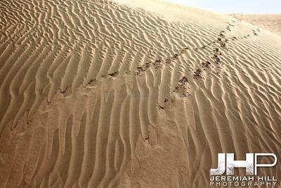 """""""Desert Tracks #1"""",  Thar Desert, Rajashtan, India, 2007 Print IND3926-133"""