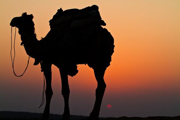 Thar desert sunset