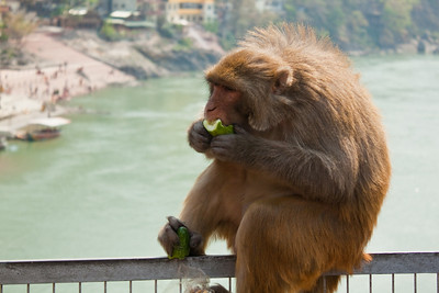 Forget the trolls, this guy's got it covered--Rishikesh, India